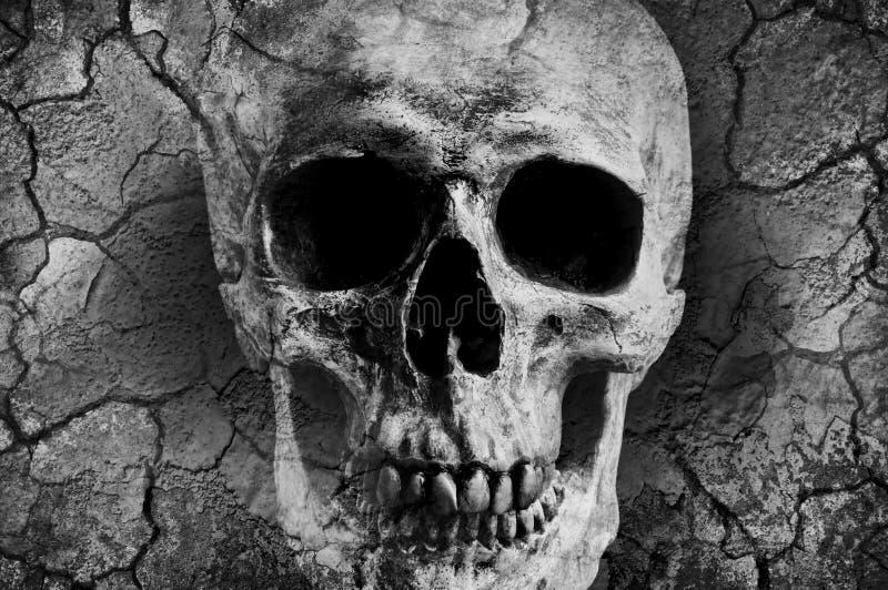 Menschlicher Schädel gemischt mit Schmutzbeschaffenheit stockfoto