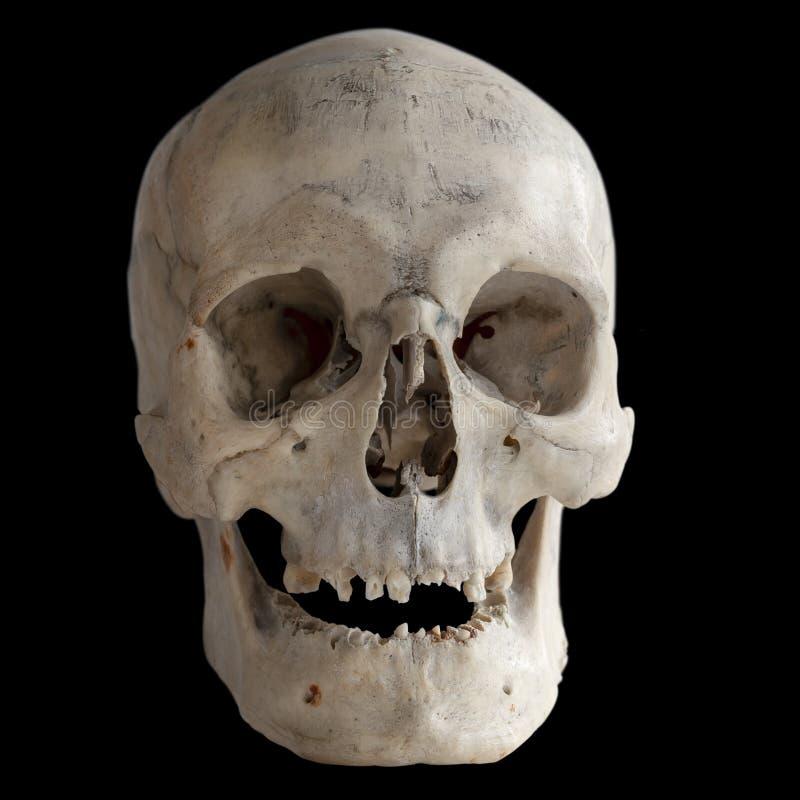 Menschlicher Schädel lokalisiert auf Schwarzem, Nahaufnahme stockfoto