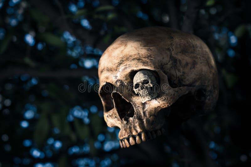 Menschlicher Schädel mit dem bokeh lizenzfreie stockbilder
