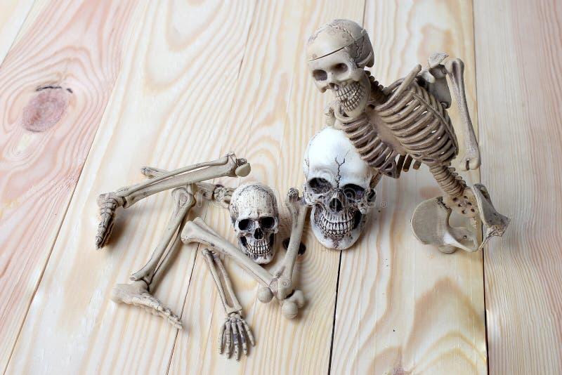 Menschlicher Schädel und menschliches Skelett auf Kiefernholzhintergrund stockfoto