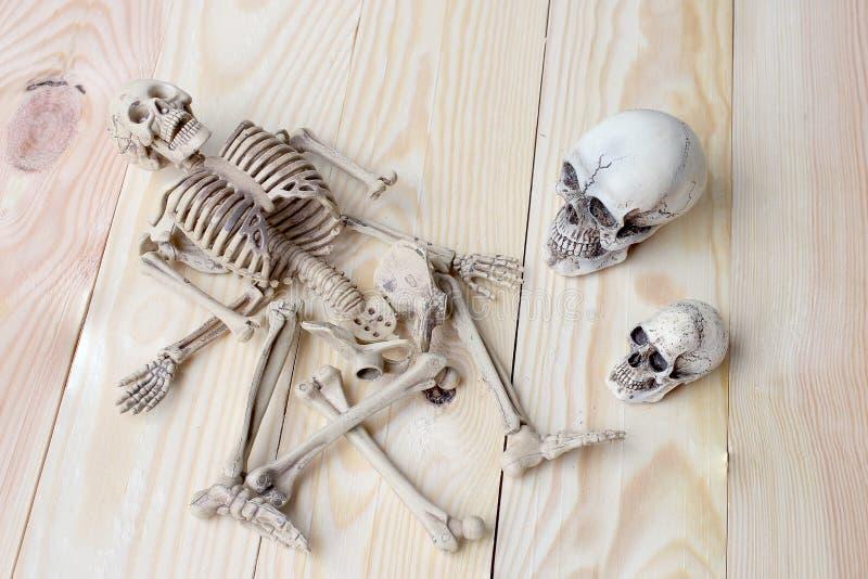 Menschlicher Schädel und menschliches Skelett auf Kiefernholzhintergrund stockbild