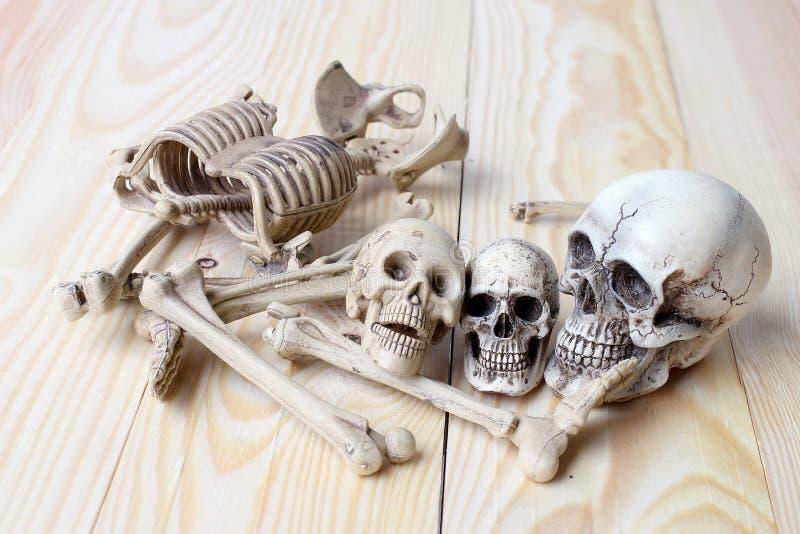 Menschlicher Schädel und menschliches Skelett auf Kiefernholzhintergrund lizenzfreies stockfoto