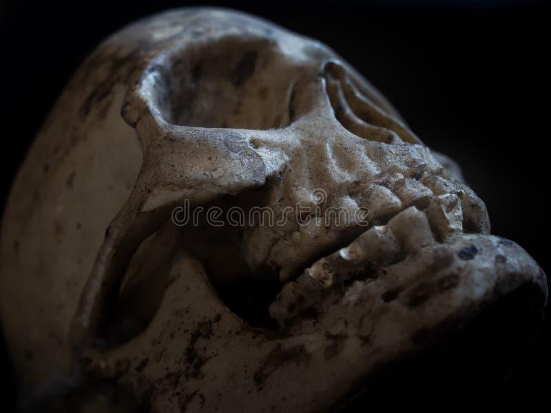 Menschlicher Schädelhorrorkopf auf schwarzem Hintergrund stockfotos