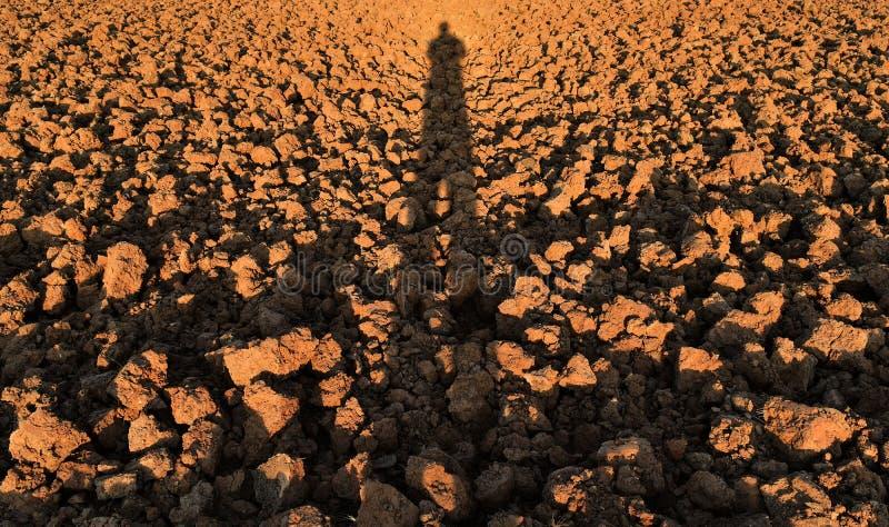 Menschlicher Schatten auf Bodenklumpen auf dem Reisgebiet vor Betriebsreis stockbild
