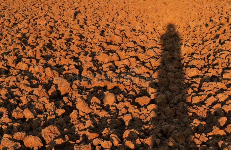 Menschlicher Schatten auf Bodenklumpen auf dem Reisgebiet vor Betriebsreis lizenzfreies stockbild