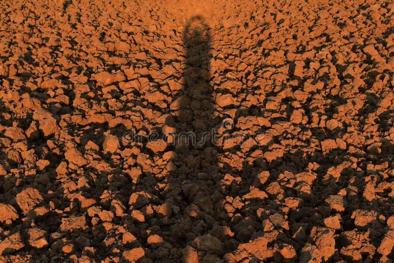 Menschlicher Schatten auf Bodenklumpen auf dem Reisgebiet vor Betriebsreis lizenzfreie stockbilder