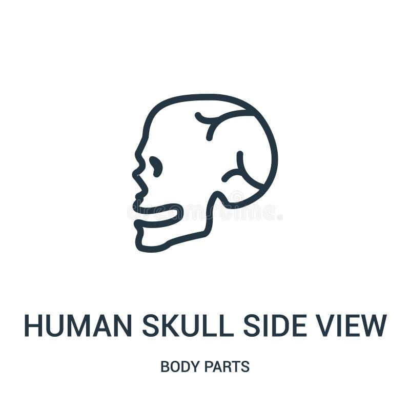 menschlicher Seitenansicht-Ikonenvektor des Schädels von der Körperteilsammlung Dünne Linie menschliche Seitenansichtentwurfsikon lizenzfreie abbildung