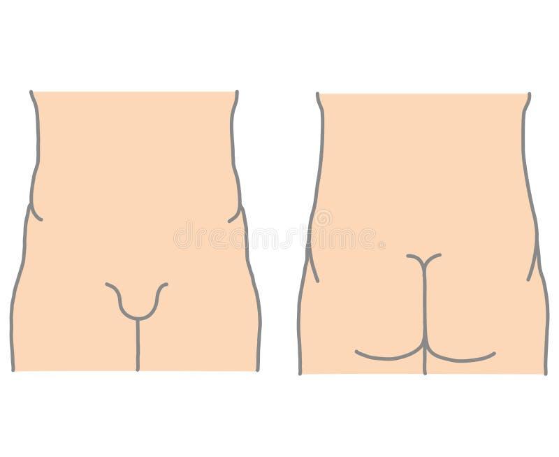 Menschlicher unterer Torso Front und Rückseite stock abbildung