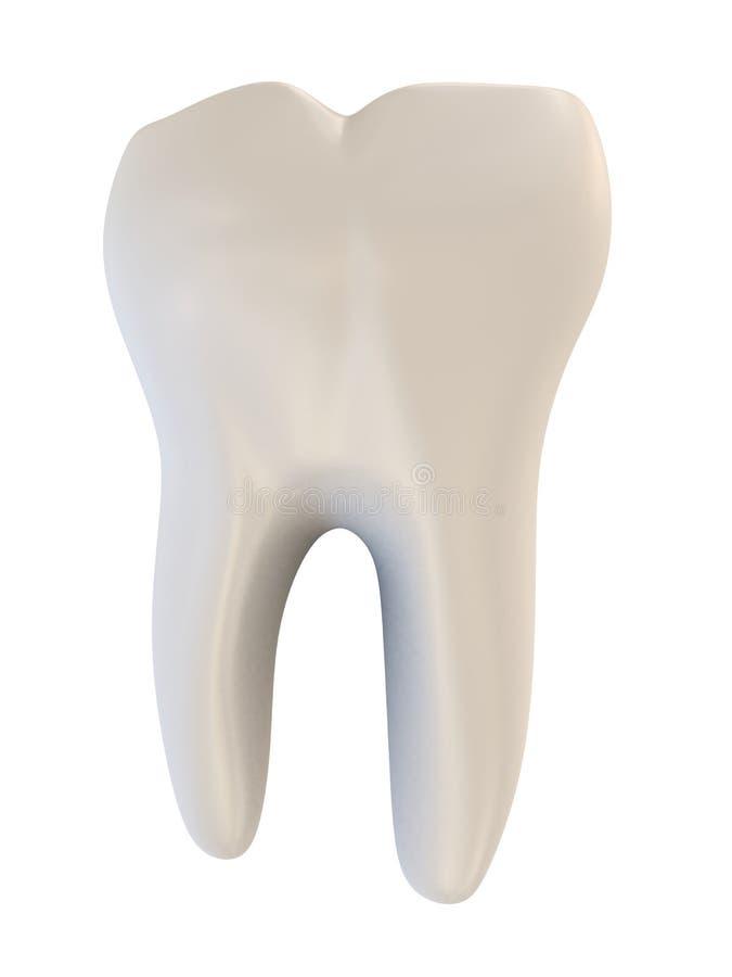 Menschlicher Zahn stock abbildung. Illustration von wurzeln - 2202267