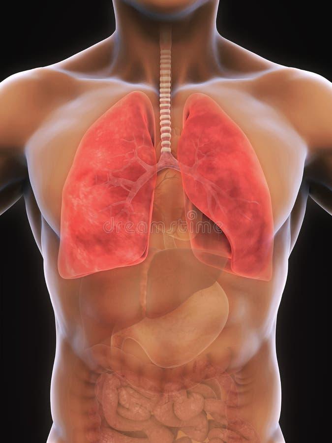 Menschliches Atmungssystem stock abbildung. Illustration von ...