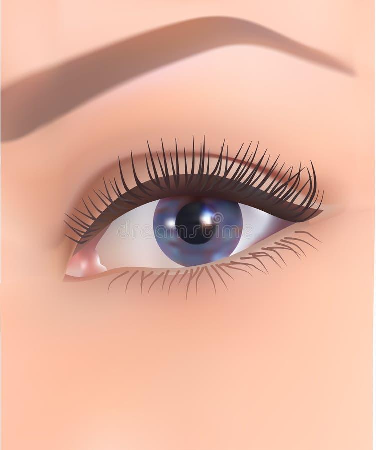 Menschliches Auge mit den langen Wimpern und mit blauer Steigungsiris, Vektorillustration über Weiß stock abbildung