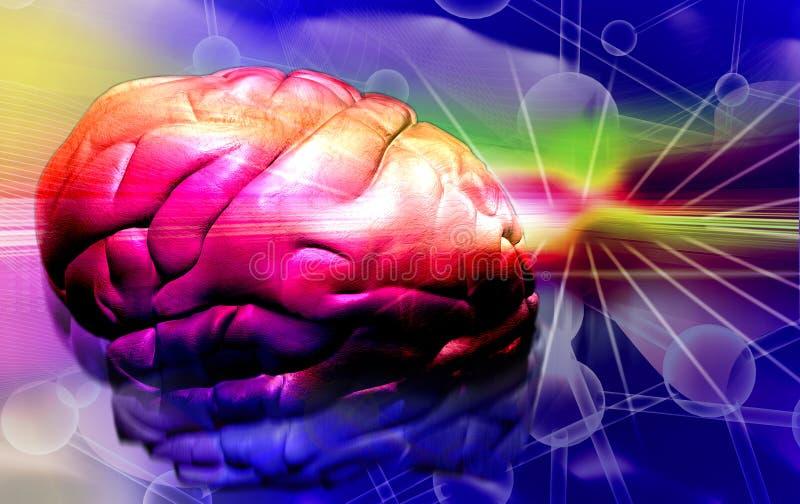 Menschliches Gehirn stock abbildung