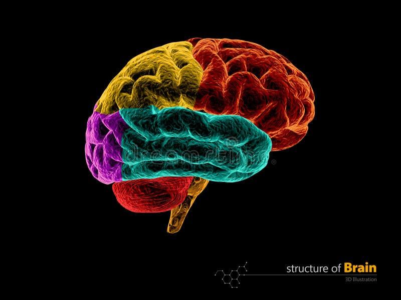 Menschliches Gehirn, Anatomiestruktur Illustration Der Anatomie 3d ...