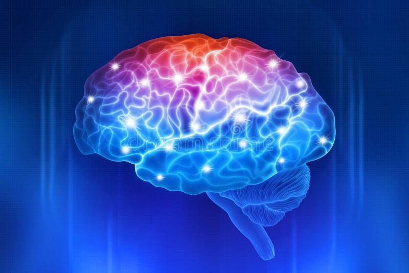 Menschliches Gehirn auf einem blauen Hintergrund Aktive Teile des Gehirns vektor abbildung