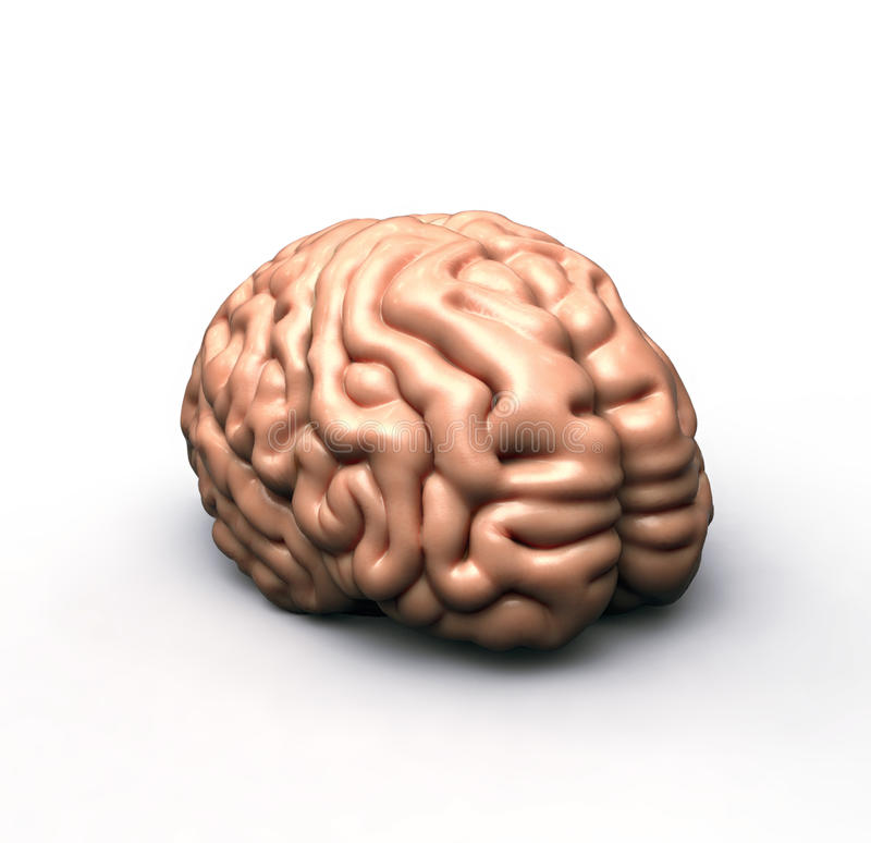 Menschliches Gehirn auf Weiß vektor abbildung
