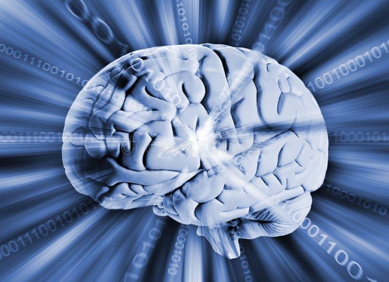 Menschliches Gehirn mit binär Code stockbild
