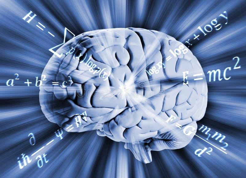 Menschliches Gehirn mit Mathegleichungen stockfotografie