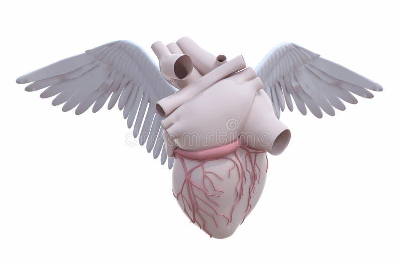 Menschliches Herz mit Flügeln lizenzfreie abbildung