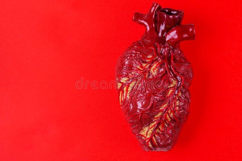 Menschliches Herzlehmmodell Medizinisches Konzept des roten Hintergrundes lizenzfreie stockfotos