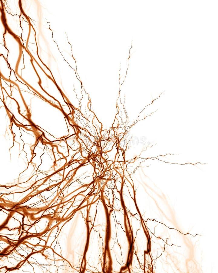 Menschliches Nervensystem stock abbildung. Illustration von neuron ...
