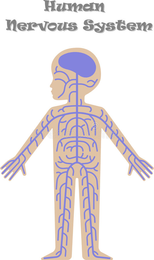 Menschliches Nervensystem für Kinder lizenzfreie abbildung