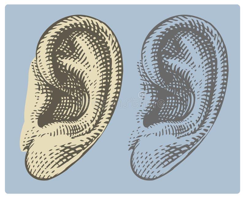 Menschliches Ohr in gravierter Art lizenzfreie abbildung