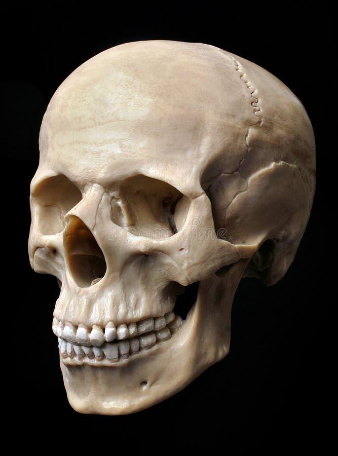 Menschliches Schädel-Baumuster stockfoto
