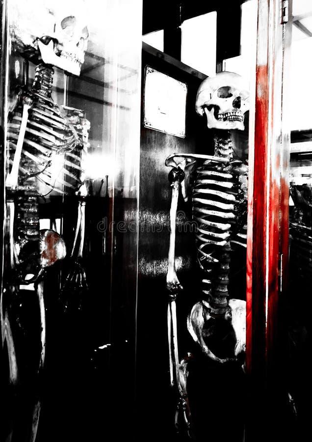Menschliches Skeleton schreckliches Schwarzweißfotografie mit rotem Blutfleck stockfotografie