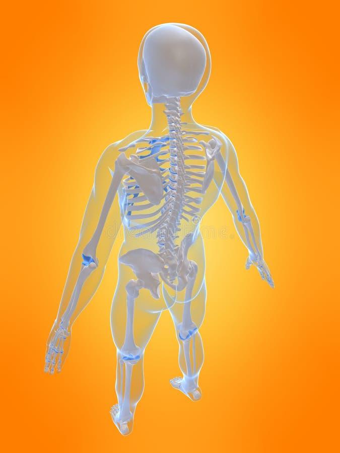 Menschliches Skelett stock abbildung