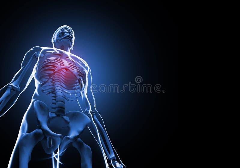 Menschliches Skelett lizenzfreie abbildung