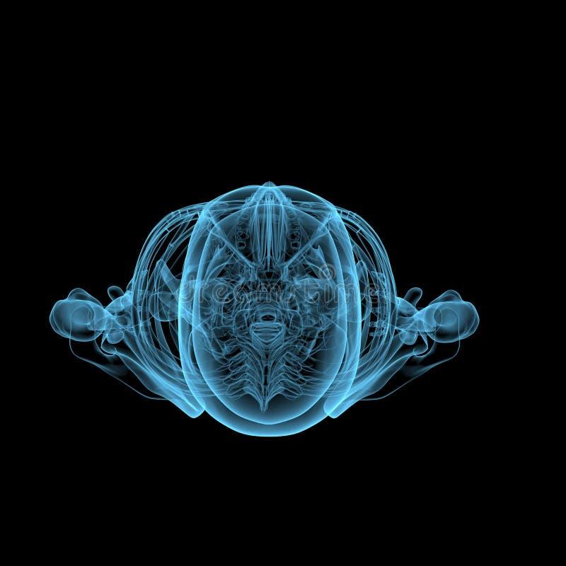 Menschliches Skelett (blaue transparente des Röntgenstrahls 3D) lizenzfreie stockfotos