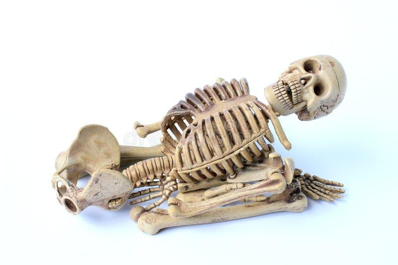Menschliches Skelett getrennt auf weißem Hintergrund stockfotografie