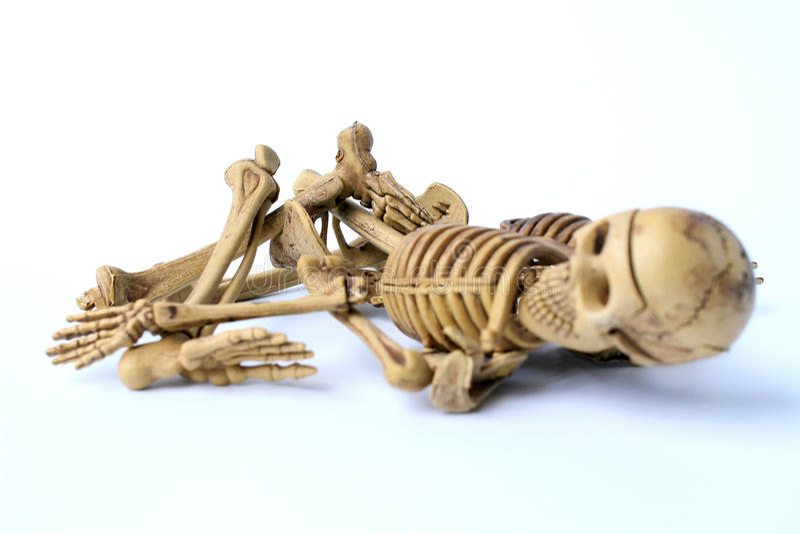 Menschliches Skelett getrennt auf weißem Hintergrund stockbilder