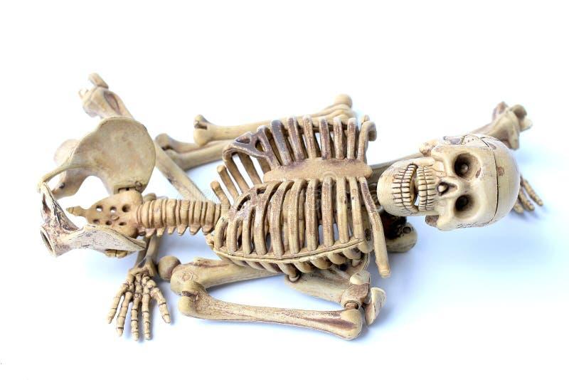 Menschliches Skelett getrennt auf weißem Hintergrund lizenzfreie stockfotos