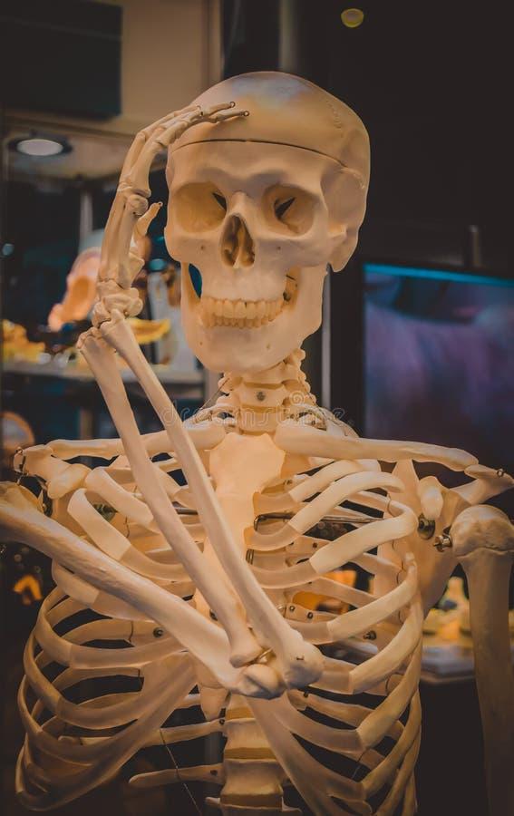 Menschliches Skelett und Plan einer menschlichen Schädelnahaufnahme, lizenzfreies stockbild