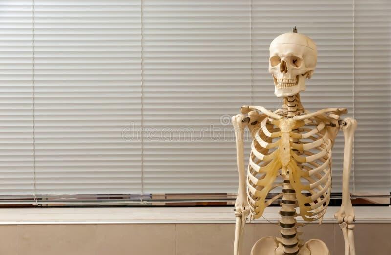 Menschliches Skelett und Schädel lizenzfreies stockbild