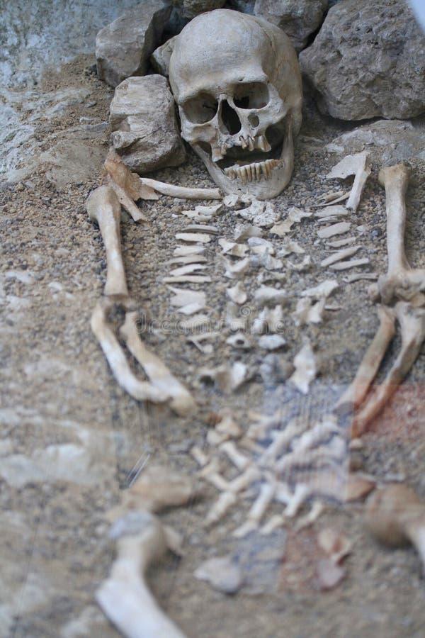 Menschliches Skelett von einer archäologischen Aushöhlung stockfotos