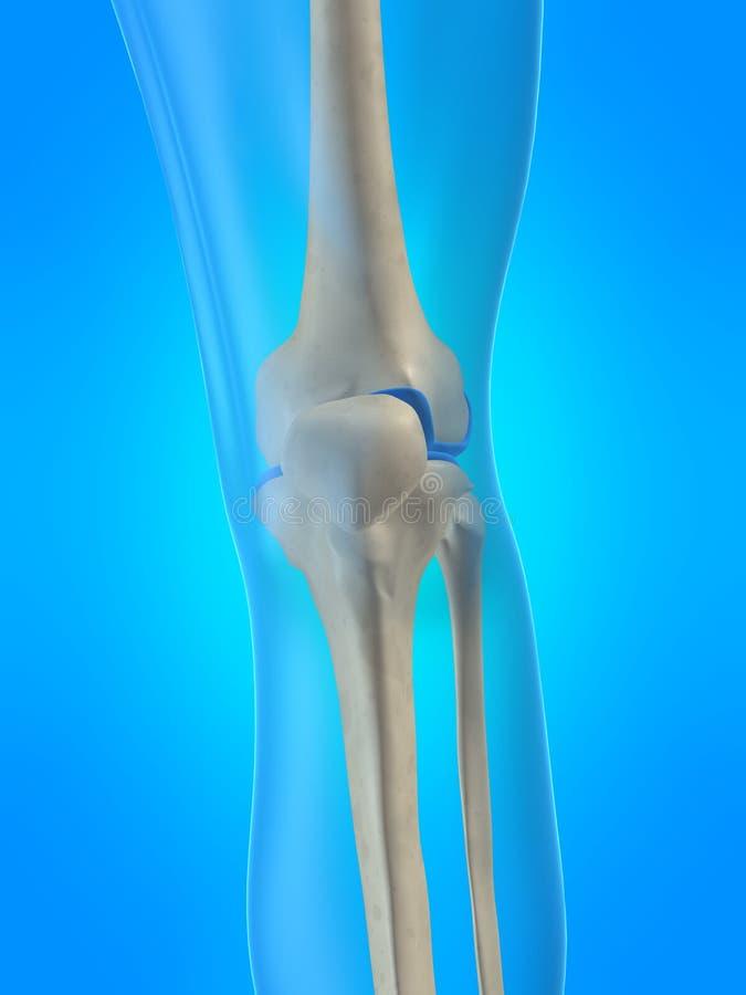 Menschliches skelettartiges Knie stock abbildung