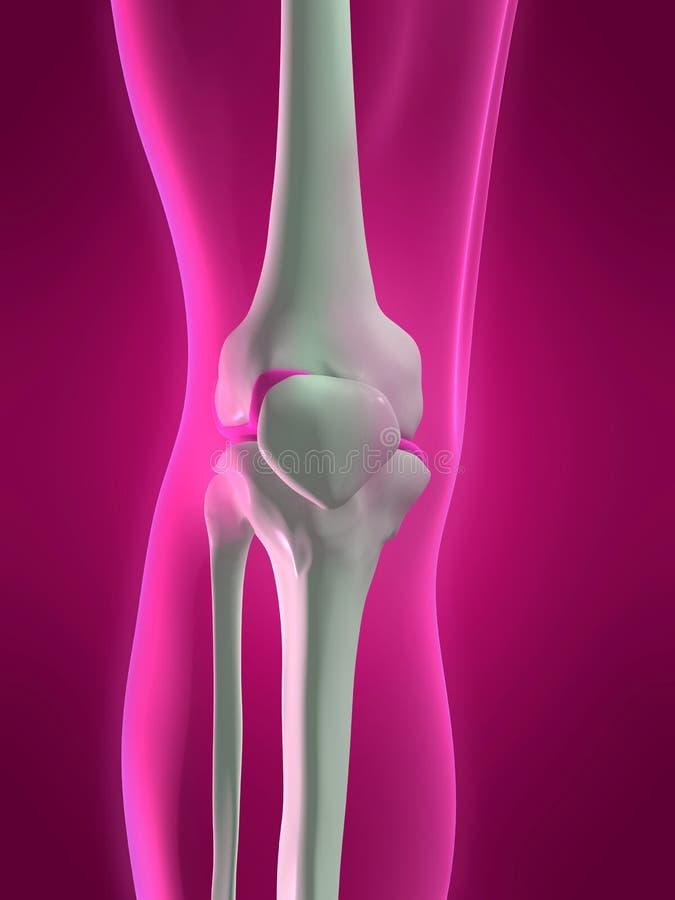 Menschliches skelettartiges Knie lizenzfreie abbildung