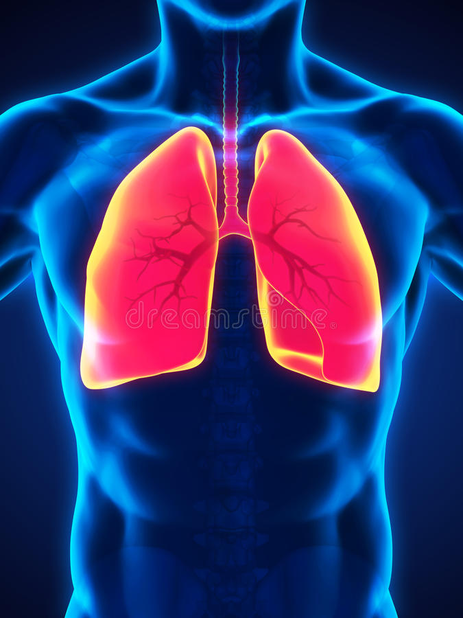 Menselijk ademhalingssysteem vector illustratie