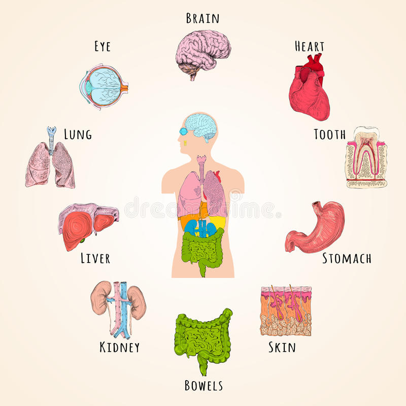 Menselijk anatomieconcept vector illustratie