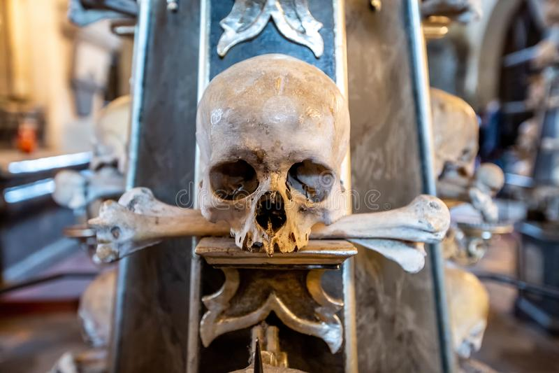 Menselijk been met been groot been in tanden royalty-vrije stock foto