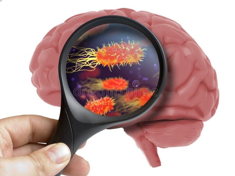 Menselijk Brain Analyzed met het overdrijven van geïsoleerde binnenkant van de virus de bacteriële microbe royalty-vrije stock foto