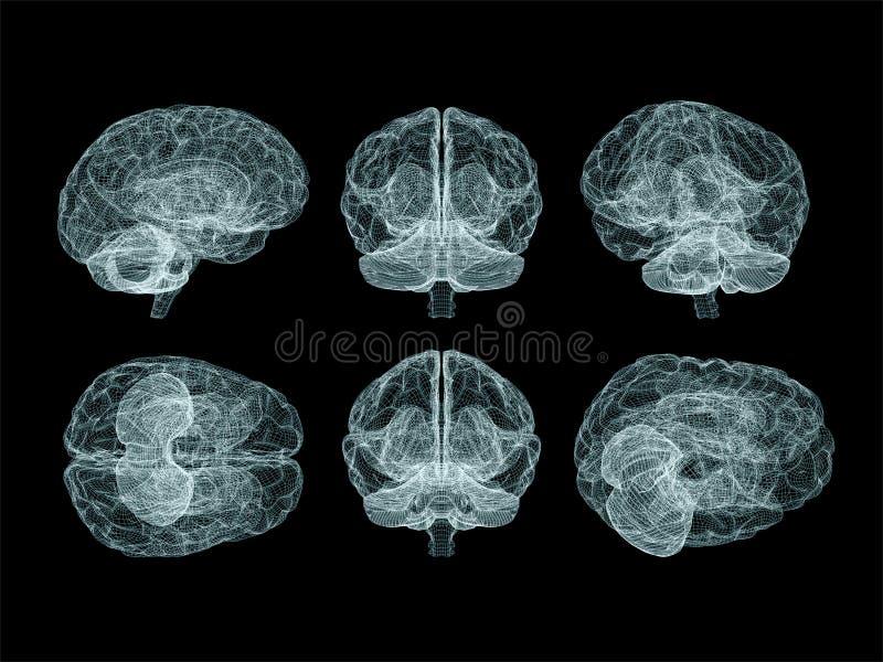 Menselijk Brain Anatomy Reeks veelvoudige Meningen vector illustratie