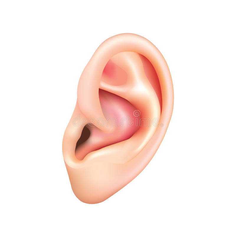 Menselijk die oor op witte vector wordt geïsoleerd stock illustratie