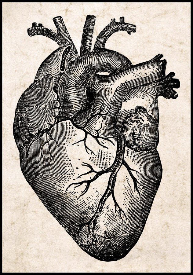 Menselijk hart. royalty-vrije illustratie