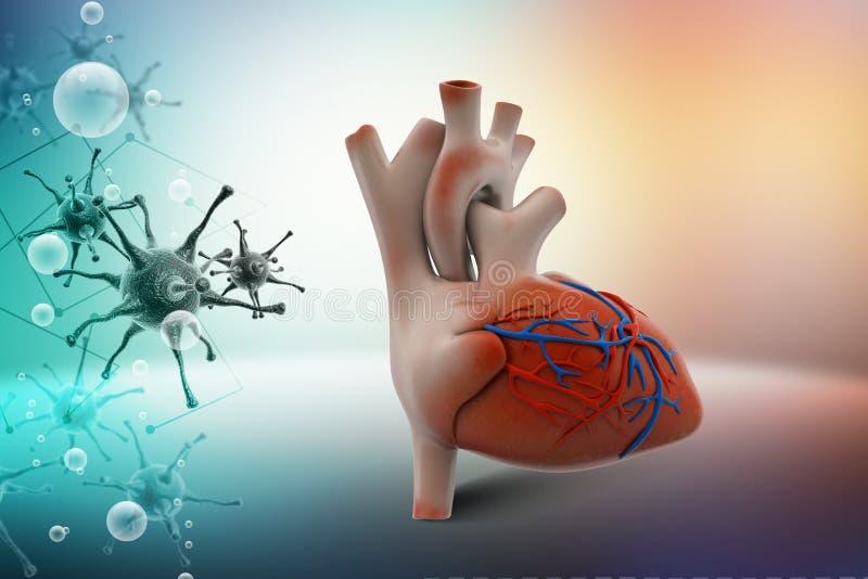 Menselijk hart royalty-vrije illustratie