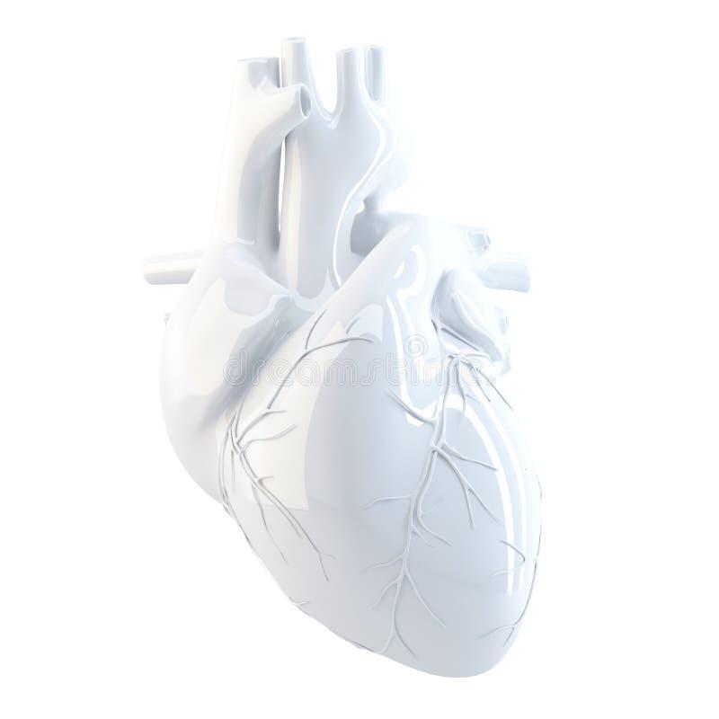 Menselijk hart 3d geef terug Geïsoleerd, bevat het knippen weg vector illustratie