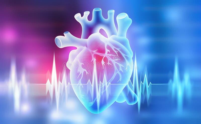 Menselijk hart 3D illustratie op een medische achtergrond vector illustratie