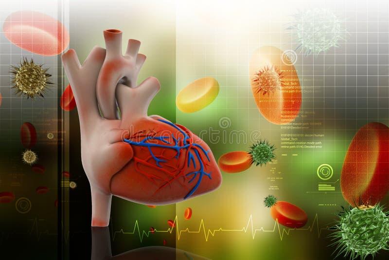 Menselijk hart met plaatjes vector illustratie